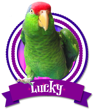 Lucky the Talking Bird